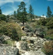 Foothill Woodland transitioning into Chaparral.  Photo by Peggy Moore/USGS