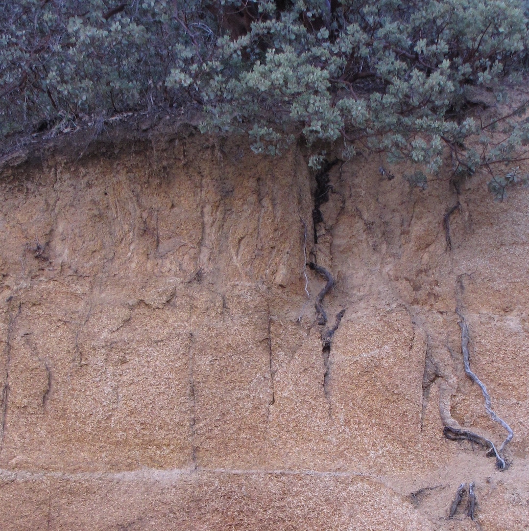 Soil profile in granitic bedrock