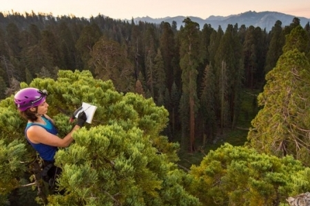 Wendy Baxter in a giant sequoia